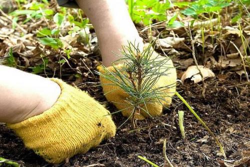 Акция «Неделя леса» ждет волонтеров!