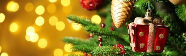 С 20 декабря 2018 года ГЛХУ «Брестский лесхоз» начинает реализацию новогодних деревьев.