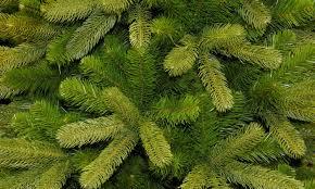 Подведены итоги реализации новогодних деревьев