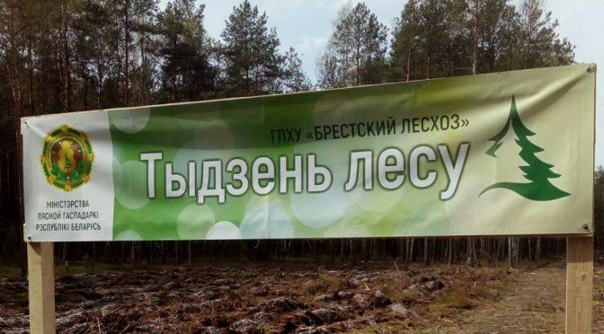 Подводим итоги акции «Неделя леса — 2019»