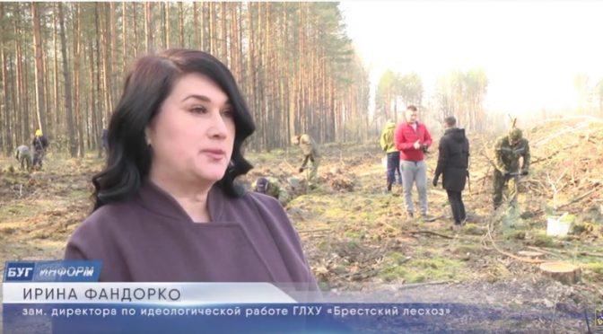 Завершилась акция «Неделя леса 2020». Как это было