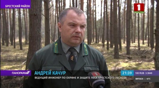 Как охраняют лес от пожара
