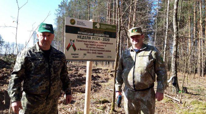 Закрытие акции «Неделя леса»