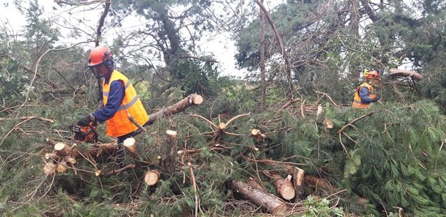Продолжаются работы по ликвидации последствий урагана