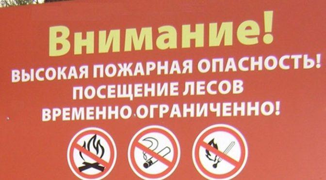 Введён запрет на посещение лесов