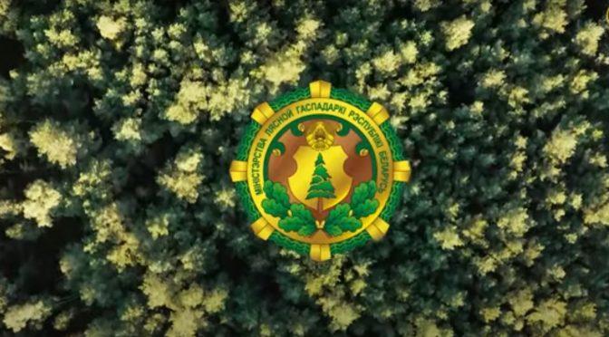 """Посмотрите документальный фильм """"Книга леса: повесть в девяти главах"""