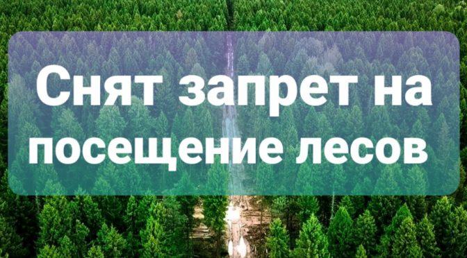 Снят запрет на посещение лесов